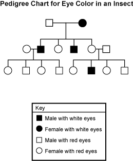 Study guide the pedigree chart shows the inheritance pattern for eye color that results when a red eyed male mates with a white eyed female ccuart Choice Image